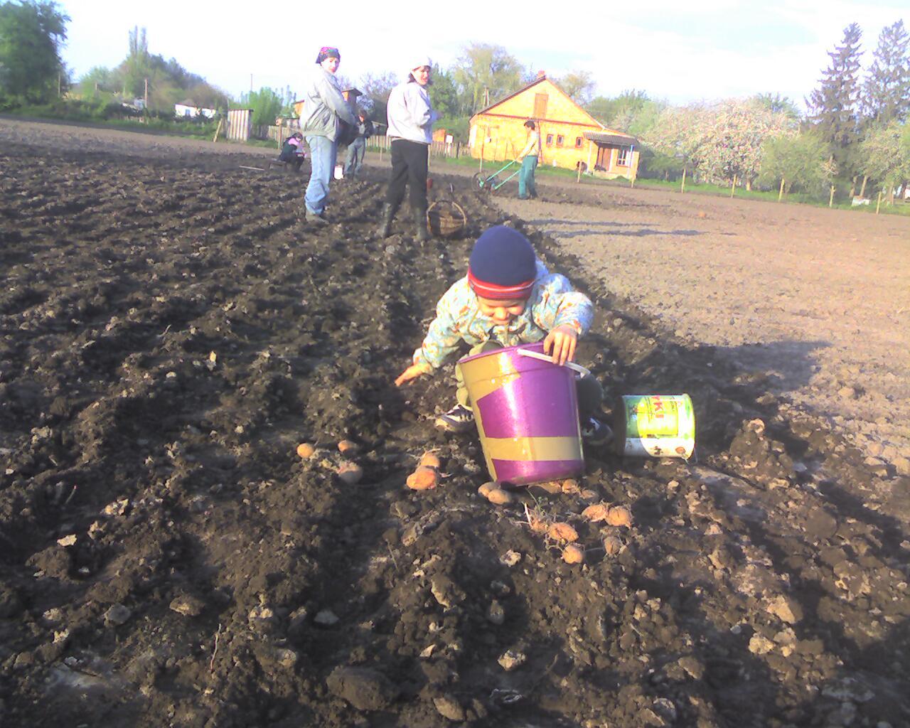 Когда будем сажать картошку в этом году